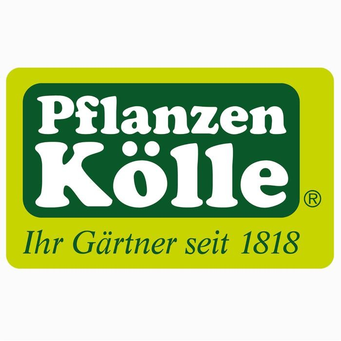 pflanzen k lle gartencenter gmbh co kg berlin wildau blumen in wildau gewerbepark 1. Black Bedroom Furniture Sets. Home Design Ideas
